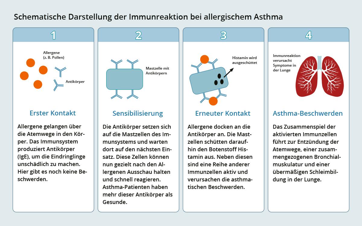 Infografik Asthma bronchiale